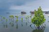 Mangrove Restoration