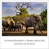 Elephant Herd Square 12x12