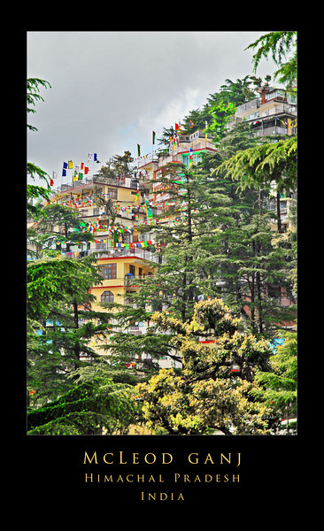 "McLeod Ganj, or as it is more commonly known in the west, Upper Dharamsala, is the home of His Holiness the Dali Lama and the seat of the Tibetan exile government.  The town is located in northeastern India at the blessedly cool altitude of 5800 feet. It is to be found in the mountains north of the Kangra Valley. To get there took us five hours.  The three of us and all of our gear were jammed into a taxi that hurtled thru the night  from the nearest large  airport in Amritsar. The first thing I noticed when we got there  and the sun came up (other than the ""assertive verticality"" of the the place) was the profusion of prayer flags . Everywhere I looked, the brilliantly colored flags were flying in the breeze  sending  prayers into the  clearing morning sky."