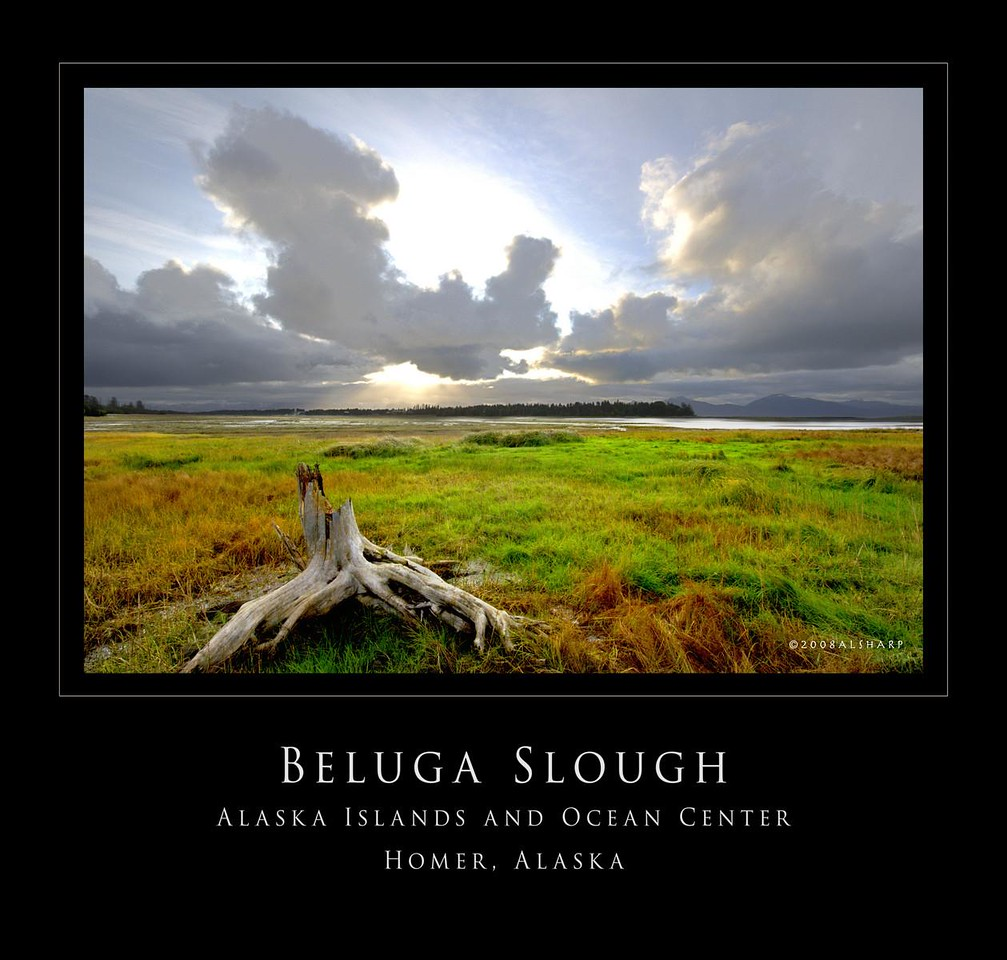 """Beluga Slough is a tidal marsh and lagoon on Homer's northern shoreline"" . .  .  During migration seasons it is a hot spot for birders<br /> ""The slough is linked to the sea via a tidal inlet that gets pushed by longshore drift westward toward Munson Point. This poses a problem for the private property owners on that side, so apparently someone goes out and rearranges the channel now and then. It must be a challenge for naturalists working on the marsh when some eight-year old asks them why there is bulldozer in the slough or out on the beach.""  quoted from ""Gravel Beach Blog""  <a href=""http://gravelbeach.blogspot.com/2008/06/beluga-slough.html"">http://gravelbeach.blogspot.com/2008/06/beluga-slough.html</a><br /> It is part of a system of trails  and ""boardwalks"" sponsored by the Alaska Islands and Ocean Visitor Center in Homer.    <a href=""http://www.islandsandocean.org"">http://www.islandsandocean.org</a>       <a href=""http://www.akcoastalstudies.org"">http://www.akcoastalstudies.org</a>"