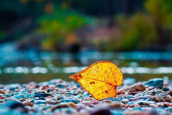 Autumn on Cathedral Beach Yosemite National Park submitted by: Rochelle Villanueva from USA