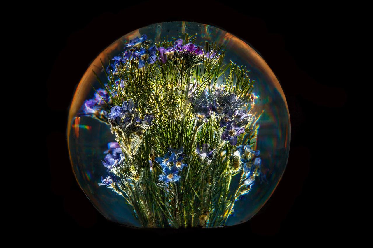 Garden Under Glass