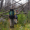 We crawl under a tangle of birches.  BWAC was not allowed to clear treefalls on Pow Wow Trail this year.