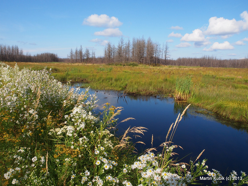 View about three miles from trailhead.  The 200 yard long beaver dam/ former logging road is dotted with colorful asters.