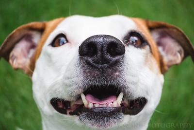 Powell Pups