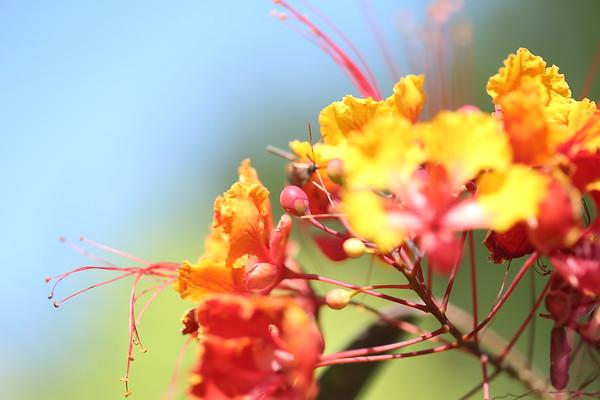 Prange Butterfly Garden & Labor Day Pics
