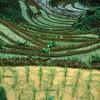 Rice terraces near Sa Pa, Vietnam.