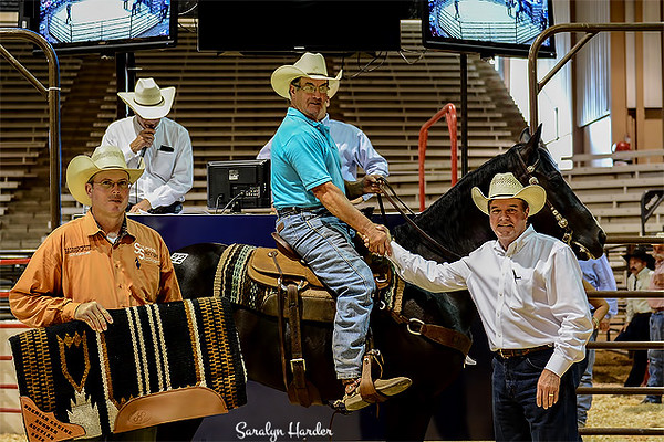 This is Hip #22 - Cee Lena Pep a 2004 chestnut gelding consigned by Lolley Performance Horses of Dubach, Louisiana. He was shown in the competition by Shawn Holden and tied for 2nd and 3rd. He ended up in second place after the tie breaker. He is an NCHA money earner and good on the head side. He sold for $9000. He received $2500 and a saddle pad
