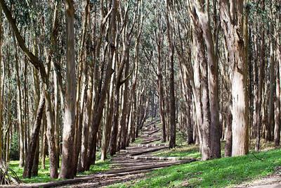 Presidio Wood Line