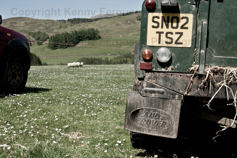Sheep dog trials Achindaul Fort William