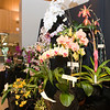 Illinois Orchid Society Fall Show & Sale – Saturday, October 12 & Sunday, October 13