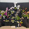Illinois Orchid Society Spring Show & Sale – Saturday, April 6 & Sunday, April 7