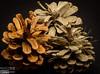 pine cones, macro photography,