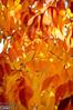 Fall colors - yellows