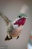 Calliope Hummingbird.