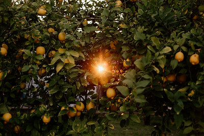 Light Peeking Through Citrus