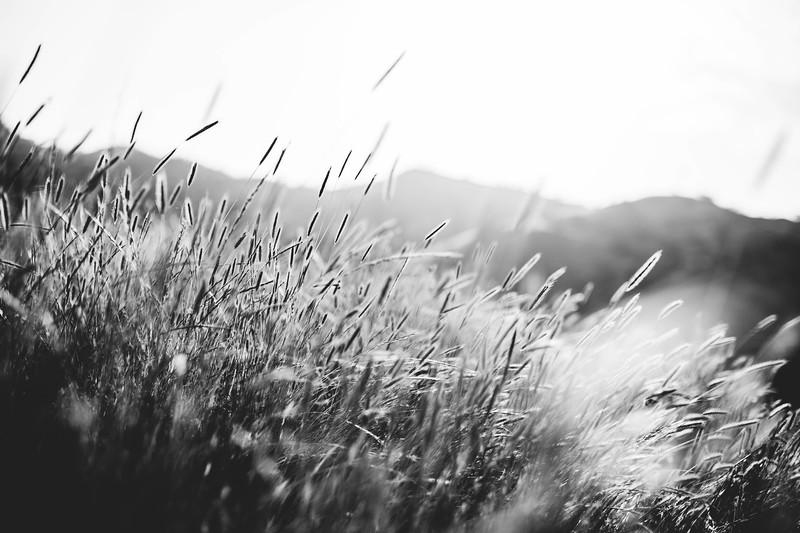 California Wild Grasses