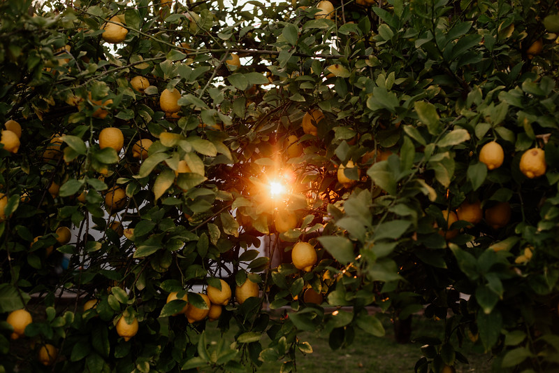 Light Peeking Through Citrus