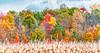 Autumn #1, <br /> Michigan, 2012
