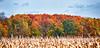 Autumn #4<br /> Michigan, 2012