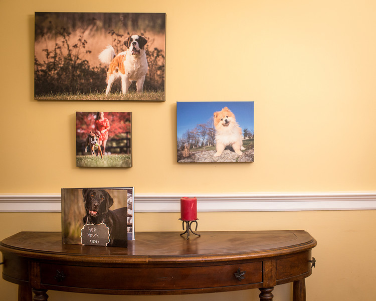 """Pupular"" products are here!  Canvas prints of various sizes and custom designed photo books of your best friend! <br /> <br /> Shown is a 16x24 canvas, a 12x12 canvas and a 10x10 canvas.  Canvases can come in a variety of sizes. The classic photo book (on the table) with a photo cover is 8.75"" x 11.25"".  Perfect for your coffee table or to take along to show your friends and family the photos of your best friends.  Guaranteed to wow all who view the photos!"