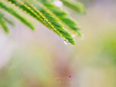 16.365  Rain day