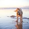 277.365<br /> Feliz dia do animal!! <br /> Vamos sacudir todos que não respeitam os direitos dos animais.
