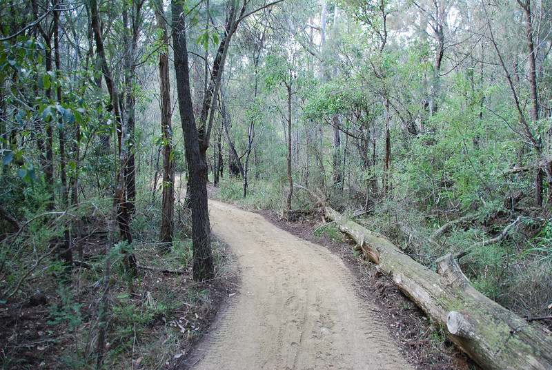 Shady Gully, Mallacoota  gravel walking track