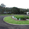 Gipsy Point gardens Boat ramp area...Lomandra and newly planted Correa reflexa.. bottom garden..Callistemon subulatus