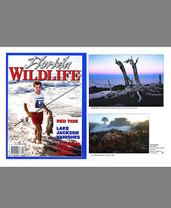 Florida Wildlife Magazine (April 2000)