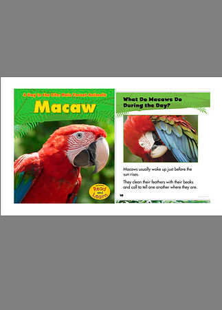 Macaw (Children's Book)