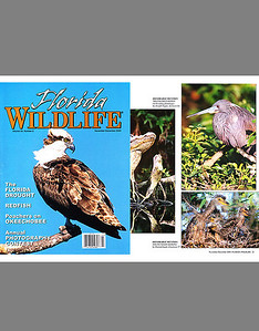 Florida Wildlife Magazine (December 2000)