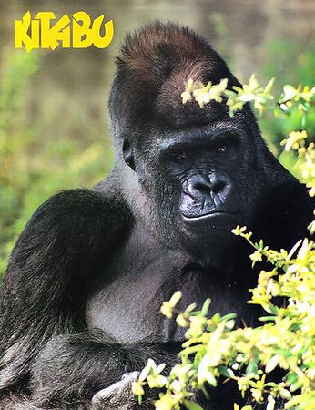 Kitabu (Cover-Jacksonville Zoo Magazine)