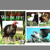 Florida Wildlife Magazine (November/December 1999)