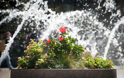 Fountain in Dede Plaza