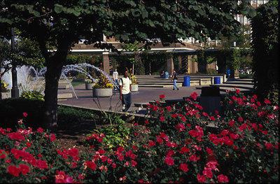 campus_flowers4[2]