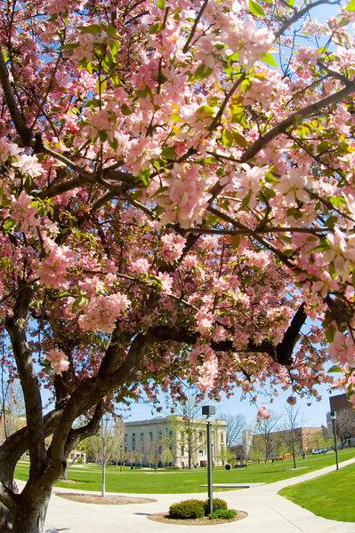 campus_scenes_022