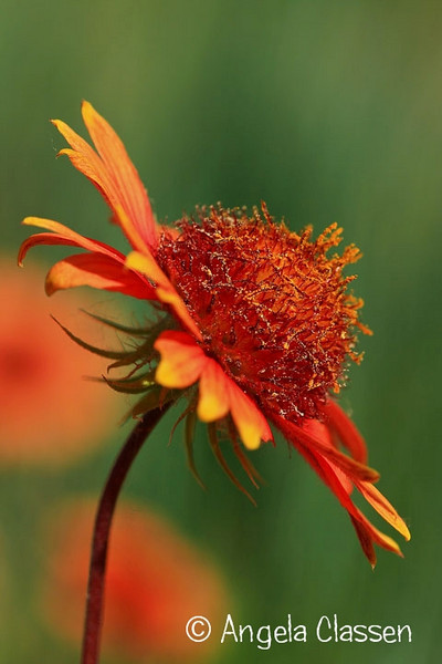 2010 Kansas Garden Show Photo Contest<br /> 1st Place - Kansas Wildflowers
