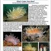 COXSWAIN. Gig Harbor Yacht Club newsletter. May 2011