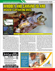 Northwest Dive News, May 2011- Painted Greenling trying to swallow Scalyhead sculpin, Keystone Jetty, Whidbey Island.