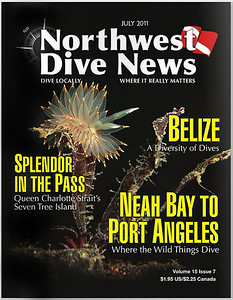 BICOLORED NUDIBRANCH	( Janolus fuscus ).  Northwest Dive News cover. July 2011