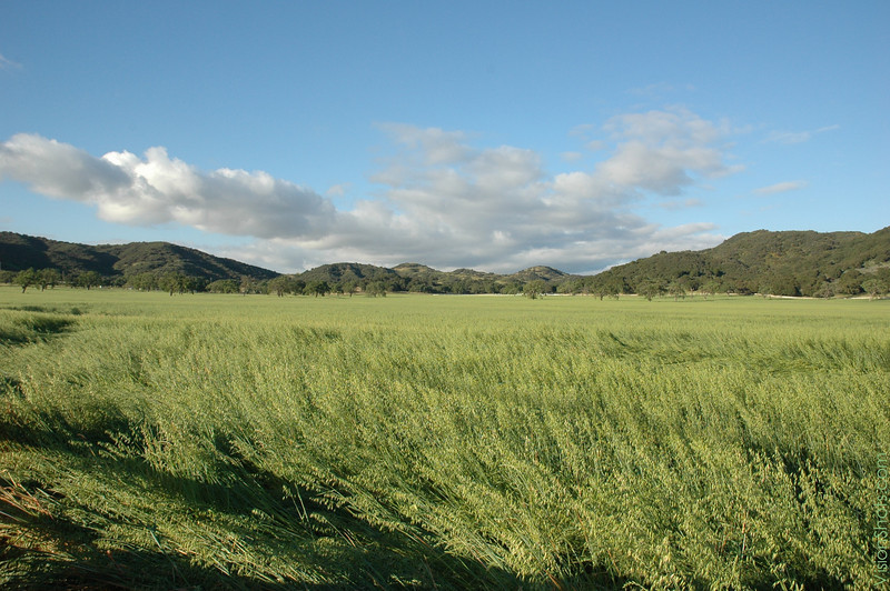 Field Flow