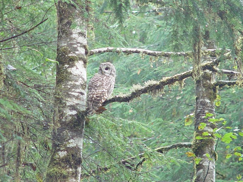 We came across this large Owl.