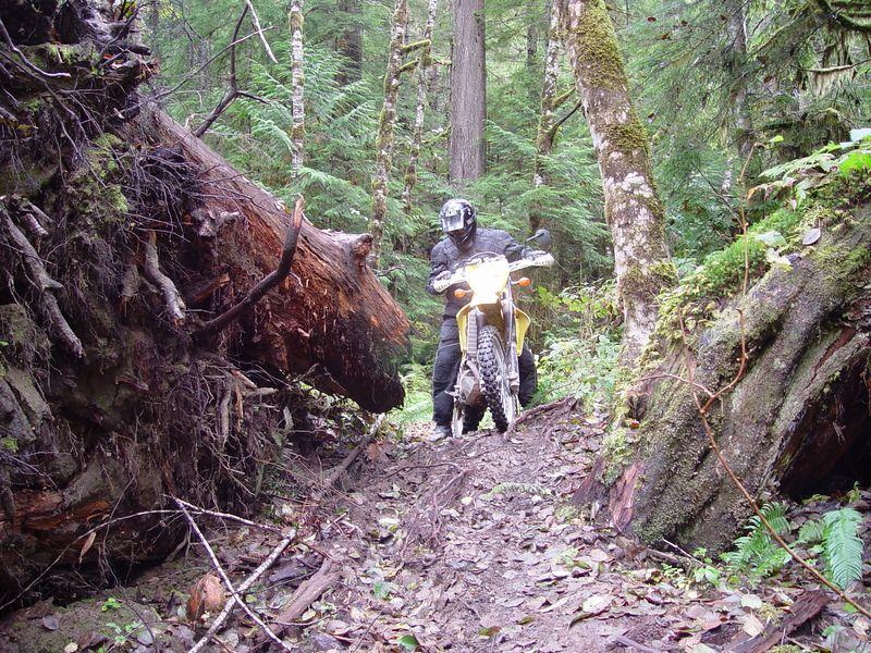 Riding around a fallen tree.