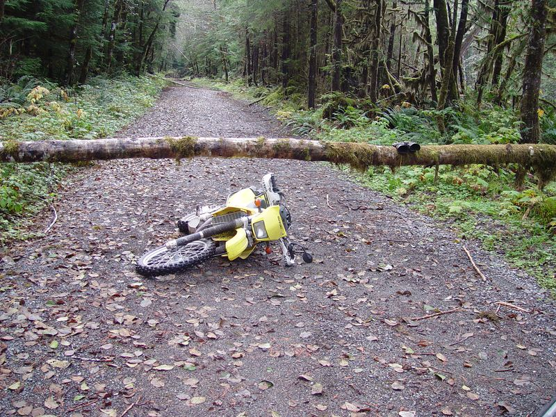 Some of the fallen trees were off the ground high enough to slide the bike under them.