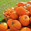 Pumpkin Pickin' - 12