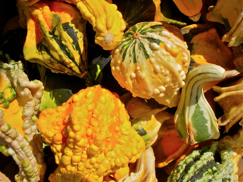 Pumpkin Pickin' - 09