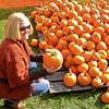 Pumpkin Pickin' - 16