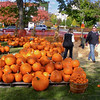 Pumpkin Pickin' - 11