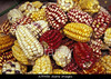 m332, Fig 7.5 ears of corn of different colors<br /> Choice 8 of 8<br /> <br /> A7FH59 South America, Peru Corn, Maize